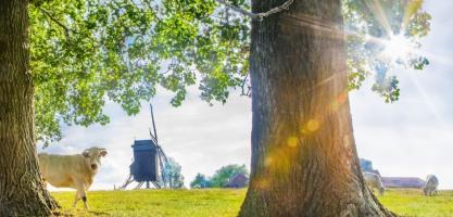 Poelbergsite- en molen