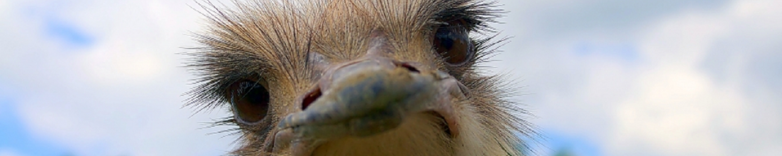 Struisvogelboerderij 'Schobbejaks Hoogte'